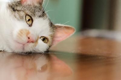ネコ 乾燥肌 ホノホ.jpg
